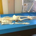 体の仕組みを楽しみながら学べる「広島市健康づくりセンター 健康科学館」