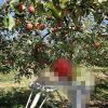 広島県内で果物狩りが楽しめる観光農園