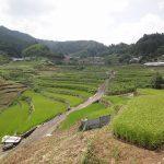 日本の棚田百選や海外サイトでも選ばれている、日本を感じられる美しい棚田「井仁の棚田」
