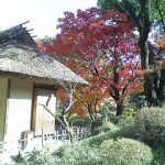 11/30(水)に縮景園で「広島東洋カープ選手と中学・高校生との文化交流会」が開催!
