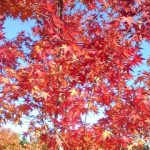広島で紅葉を楽しめる名所一覧