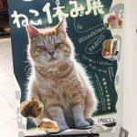 見るだけで癒される~12/5まで「ねこ休み展 in 広島パルコ」開催中!写真展「ねこ男子」も!