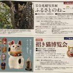 4/27(木)から福屋で「岩合光昭写真展 ふるさとのねこ」と「招き猫博覧会」が開催!