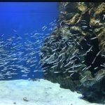 広島市内唯一の水族館「マリホ水族館」がいよいよ明日6/24(土)にグランドOPEN!
