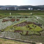 田んぼに植える稲で「カープ坊や」が!11品種の苗を使った田んぼアートを見に行ってみました