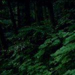 本日7/8(土)神石高原町で「ヒメボタルを観る夕べ」が開催!帝釈峡では7/8~7/16にガイド同行による観察会も