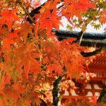 広島市内中心部からすぐに行ける紅葉スポット「不動院」と「三瀧寺」