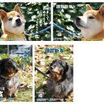 年賀状がまだ出来ていない人に!広島市動物管理センターの保護犬画像が1/15(月)まで限定公開