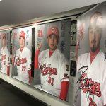 「カープベースボールギャラリー」で各選手のプロフィール仕様大判ポスターが展示中!