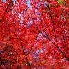 広島市内中心部からすぐに行ける紅葉スポット「三瀧寺」