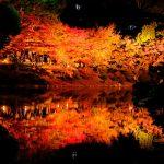 本日11/23(金・祝)から「縮景園」で「紅葉ライトアップ~泉水の灯り~」開催!12/2(日)まで