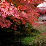広島県の名勝「吉水園」は江戸モミジの紅葉が見事!