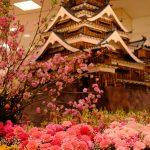 約300本の桜が花開く「広島 花の祭典」開催中!本日3/3(日)はくまモンが来場