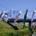 がんばれカープ!今年も西区新庄町の川では鯉のぼりが元気に泳いでいます
