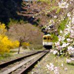 花と列車が楽しめる「安野花の駅公園」!桜の時期は過ぎましたが素敵な場所です