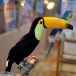 熱帯ジャングルに暮らす不思議な生き物が大集合!「いのちの楽園 秘境・アマゾン展」開催中