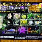 広島市植物公園で「花と光のページェント」開催!9/14(土)・15(日)・21(土)・22(日)