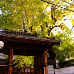 被爆樹木となっている巨大なイチョウの木がある「安楽寺」に行ってみました!