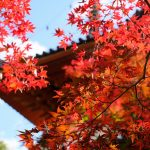 広島市内中心部からすぐに行ける紅葉スポット「三瀧寺」、見頃は来週くらい!?