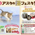 猫専門カメラマン五十嵐健太さんの「飛び猫写真展」が広島県・宮城県・秋田県で初開催!
