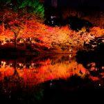 明日11/22(金)から「縮景園」で「もみじまつり 紅葉ライトアップ ~泉水の灯り~」開催!