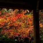"""<span class=""""title"""">西区にある「三滝寺」の紅葉もそろそろ終わりに近づいています</span>"""
