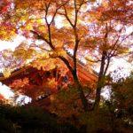 <span class="title">広島市西区にある「三滝寺」が紅葉の見頃を迎えています!</span>